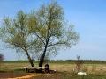 Дерево со скамеечкой