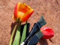 Тюльпаны художнику. Не ландыши, но всё равно отлично смотрятся