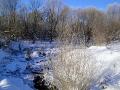 Под тонким ледком журчит ручей Кулико-Ржавец