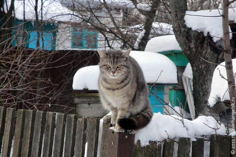 Вход во двор охраняется, чужому здесь не пройти.