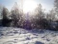 Сиреневый снег.