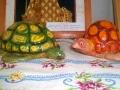 Разноцветные черепашки.
