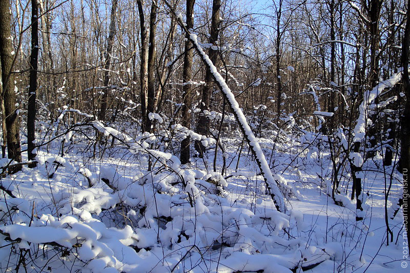 Лес красив в любое время года.