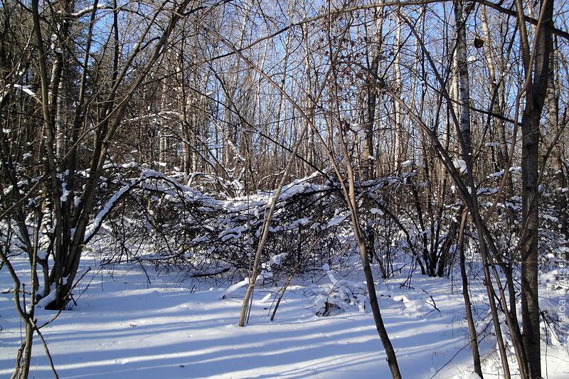 В лесу тишина, только слышен стук дятла, да крик поползня.