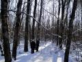 Тропа к жилищу отшельника петляет по лесу.