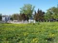 К Дню Победы расцвели и тюльпаны, и одуванчики.