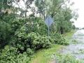 Ураган поломал деревья...