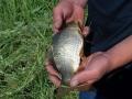 Первая рыбка — самая ценная.
