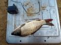 Эта рыбка, весом всего 370 гр. стала самой крупной выловленной рыбой.