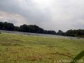 На пруду в августе много ряски