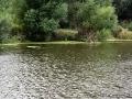 Поплавки на пруду, кажется, от сетей. Наверное, водится рыба.