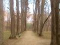 Парк в Спасском-Лутовинове.
