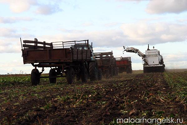 За комбайном выстраиваются тракторы с прицепами
