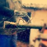 Похитителя бензопилы наказали условно