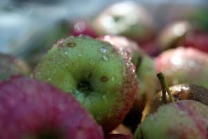 Урожай яблок в 2009 году очень хорош