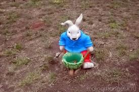 Заяц летом