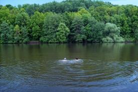 Смирновский пруд сейчас — одно из любимых мест отдыха жителей Покровского района