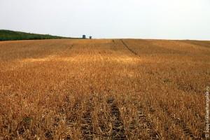Сжатое поле