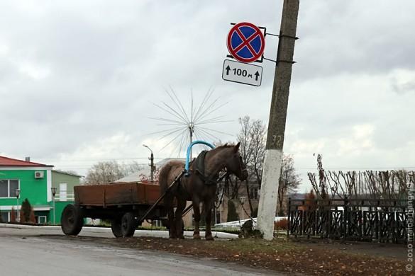 Лошадка-нарушитель ПДД.