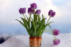 Цветы для всех барышень Малоархангельского уезда.