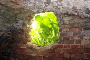 Подвал в усадьбе Киреевских. Вид изнутри подвала.