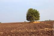 Деревья с тех пор выросли.