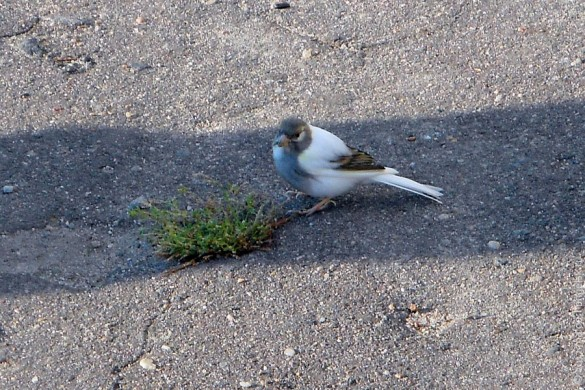 Неизвестная белая птица.