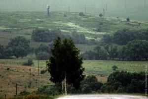 Вид на Юдинку. Берёза под дождём в июне.