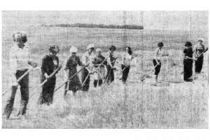 Работники РИВС за работой: сено косят.