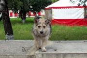 А эта собака на современной улице Лескова (она, по-моему, даже позирует).