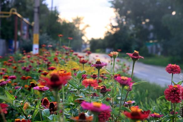 Малоархангельск. Цветы. Август 2011 года.