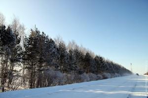 Та самая дорога на Ивань, построенная в 1984 году. Зима 2011 года.