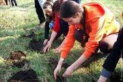 В 2010 — 2011 учебном году учащимися недалеко от школы заложен питомник в 500 саженцев ели.