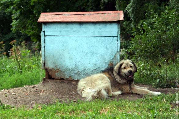 Собака, охраняющая храм в Архарове.
