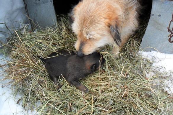 Собака от Игоря, а с нею щенок.