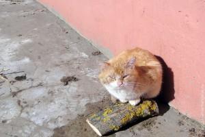 Кошка на весеннем солнышке.