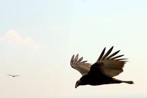 Птица кружит неподалёку от малоархангельского небоскрёба Тургенев.