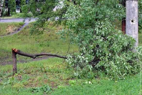 Сломанное ветром дерево.