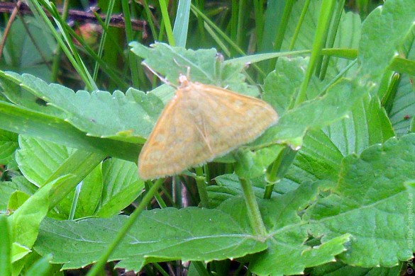 Бабочка желтая неизвестная.