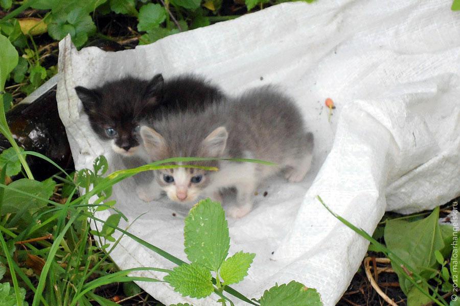 Котята, ждущие своих хозяев.