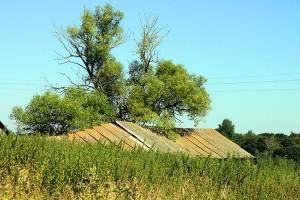 Крыши домов в Каменке торчат из высоченной крапивы.