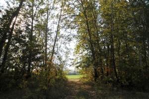 Орловские края: рощицы, поля, овраги, небо.