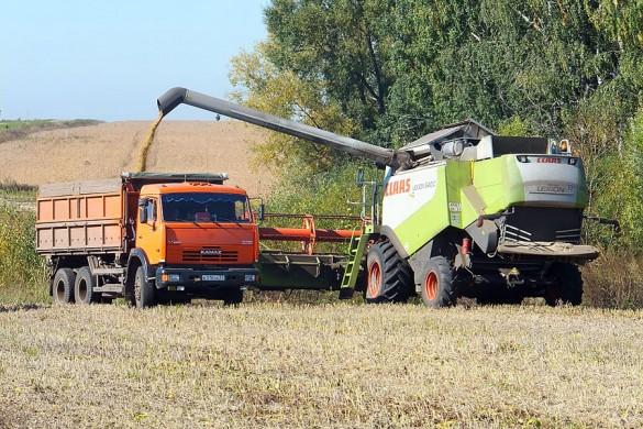 Обмолоченная соя попадает в кузов грузового автомобиля.