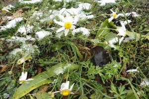 Первый снег 2012 года в Малоархангельске.