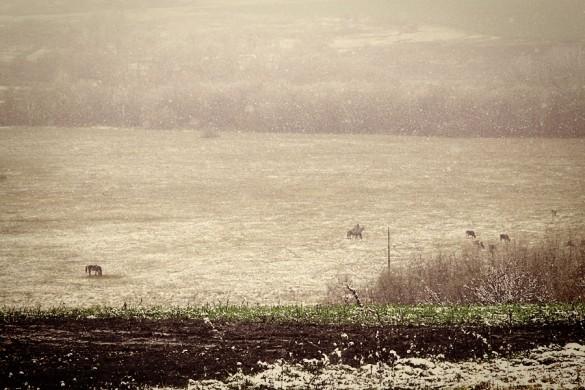 Первый снег. Слышите ли вы стук железных копыт?