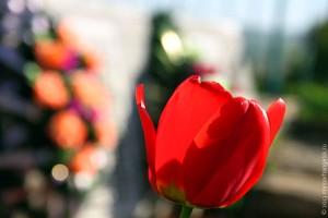 Митинг у памятника погибшим в Великой Отечественной войне на Ивани.