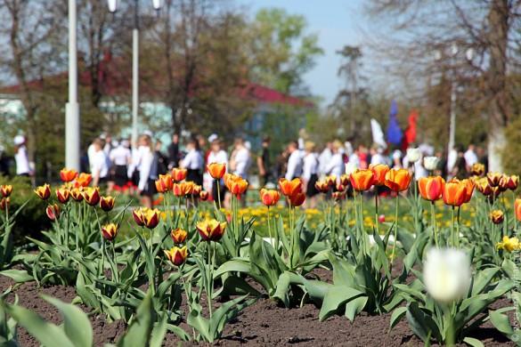 В Парке Победы Малоархангельска к празднику зацвели тюльпаны.