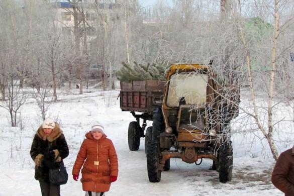 Новогодние ёлки на ярмарке в Малоархангельске.