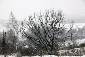 Зима 2014 года в Малоархангельске.