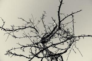 Высохшее дерево на берегу мишковского пруда в деревне Тургенево.
